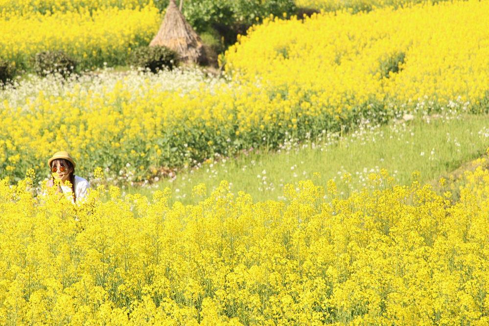 【婺源】撒欢之行✈寻找盛开的小黄花❀。