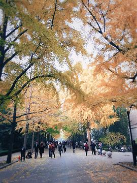 北京林业大学旅游景点攻略图