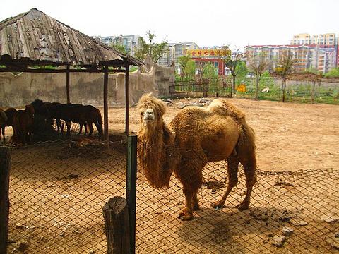 济南动物园旅游景点图片