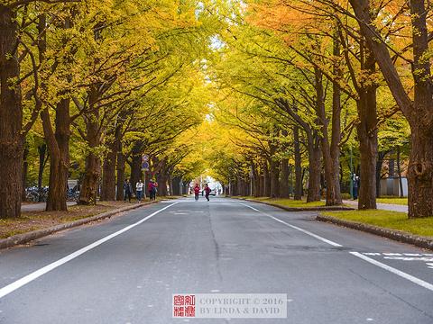 北海道大学旅游景点图片