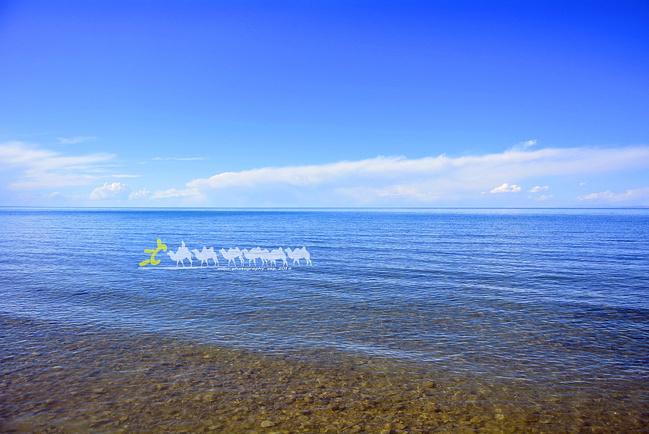 青海湖湿地图片