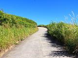 夏威夷大岛旅游景点攻略图片