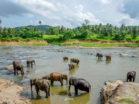 品纳维拉大象孤儿院旅游景点图片