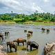 品纳维拉大象孤儿院