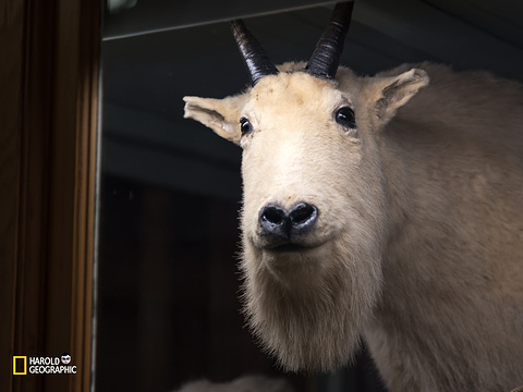 Banff Park Museum旅游景点图片