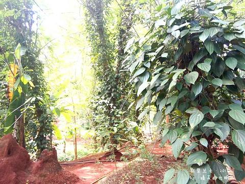 马塔莱香料花园旅游景点攻略图