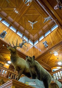 Banff Park Museum旅游景点攻略图