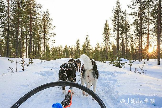雪橇之旅图片
