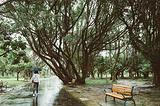 大安森林公园