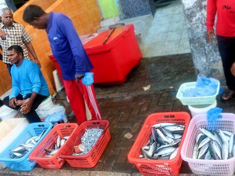 鱼市旅游景点图片