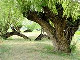 榆林旅游景点攻略图片