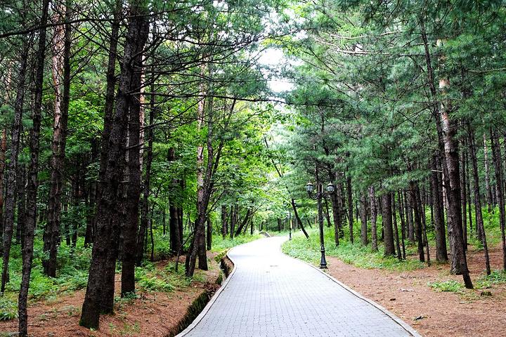 看到城市南面的伊春兴安森林公园 北山公园评论 去哪儿攻略社区