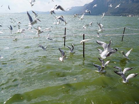海埂公园旅游景点图片
