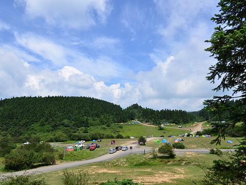仙女山国家森林公园旅游景点图片