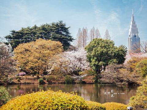 新宿御苑旅游景点图片