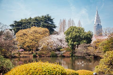 新宿御苑的图片