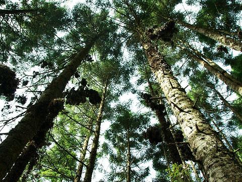 帝王蝶保护区旅游景点图片