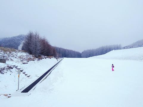 神农架国际滑雪场旅游景点图片