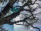 神农架旅游景点攻略图片