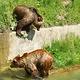 伯尔尼熊公园