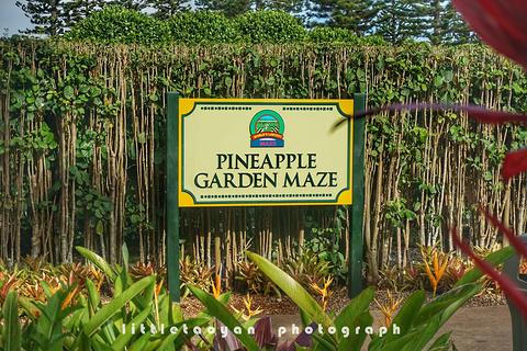 都乐菠萝种植园