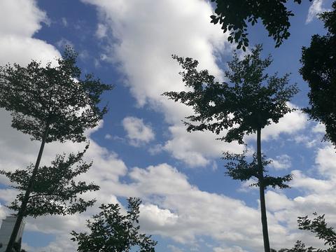 白鹭洲公园旅游景点攻略图