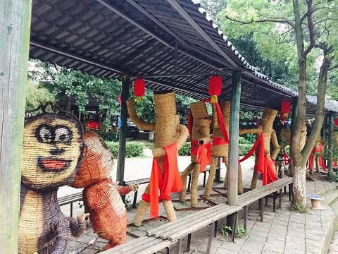 九峰森林动物园旅游景点图片
