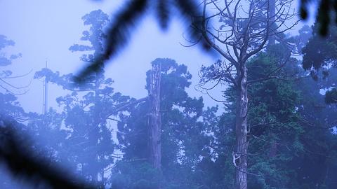 天目山旅游景点攻略图