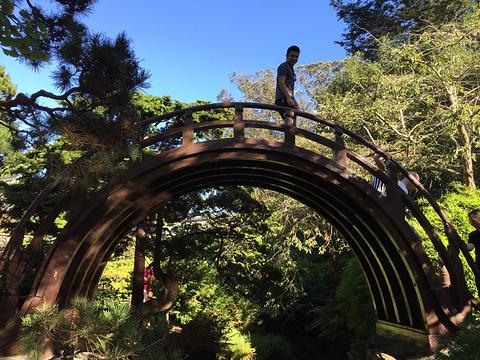 日本茶园旅游景点图片