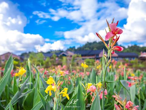 黄姚仙女湖花海旅游景点图片