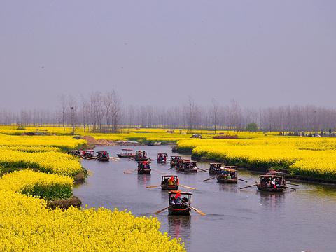 千岛菜花风景区旅游景点图片