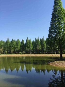 黄海森林公园的图片