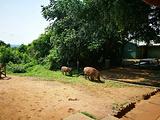 乌干达旅游景点攻略图片