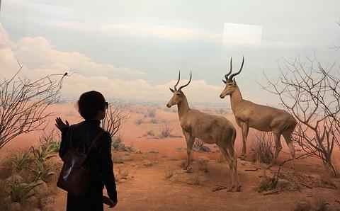 自然科学馆旅游景点攻略图