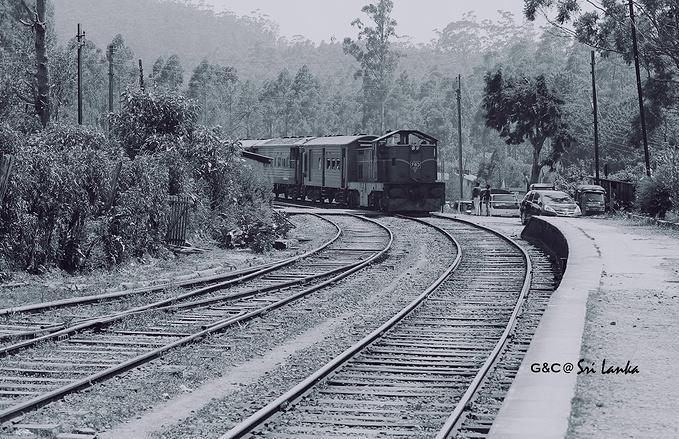 茶园火车图片