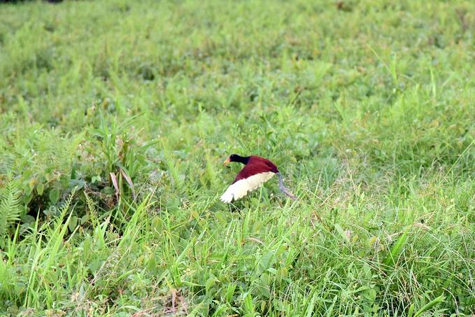 亚马逊雨林:守湖人图片