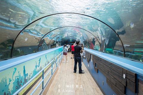 悉尼水族馆的图片