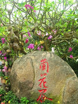亚龙湾森林公园兰花谷旅游景点攻略图