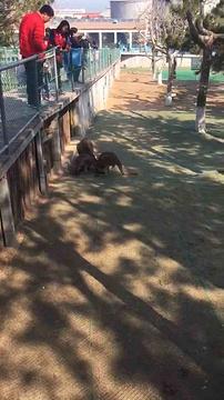 西霞口神雕山野生动物园旅游景点攻略图