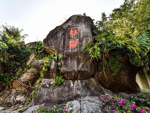 琴园旅游景点图片