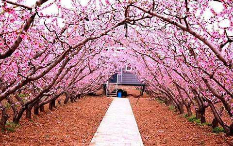 桃花故里旅游景点攻略图