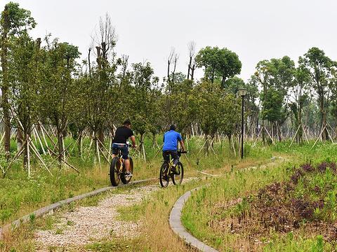 松雅湖湿地公园旅游景点图片