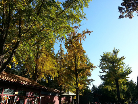 景山公园旅游景点图片