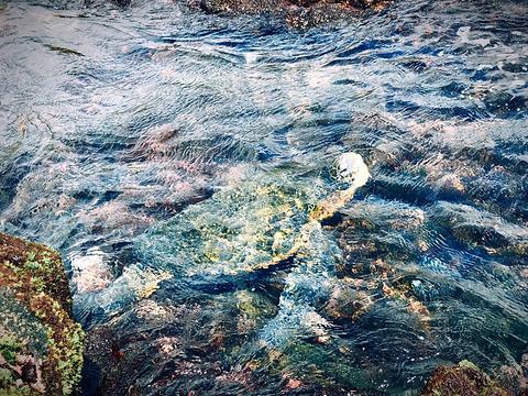 普纳鲁吾黑沙海滩旅游景点图片