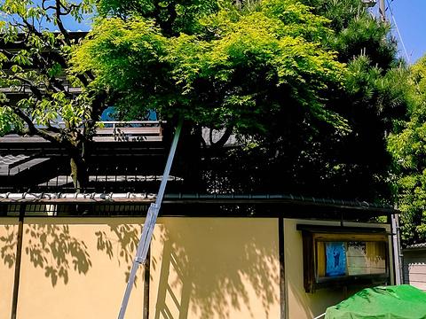 京都站旅游景点图片