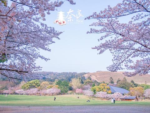 若草山旅游景点图片