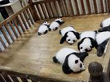 大熊猫月亮产房