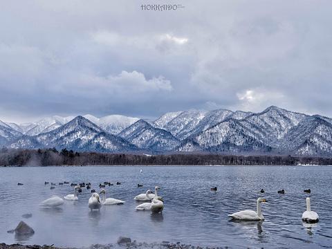 阿寒湖旅游景点图片