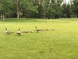 王子岛公园