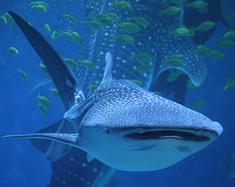 烟台极地鲸鲨馆一日游